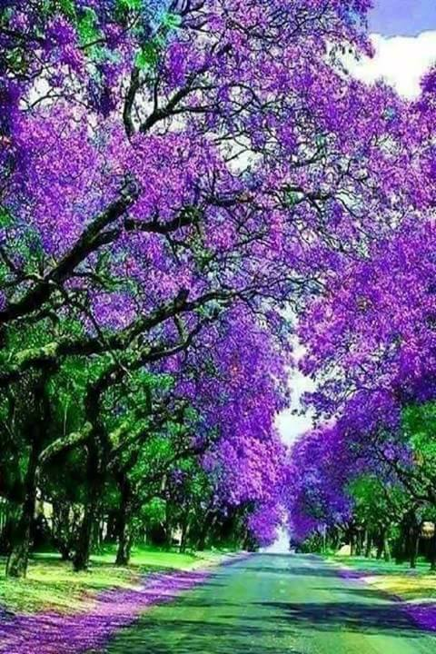 Best Natural Tree Tunnels (10 Pics)