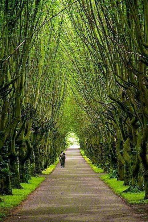 Best Natural Tree Tunnels (10 Pics)