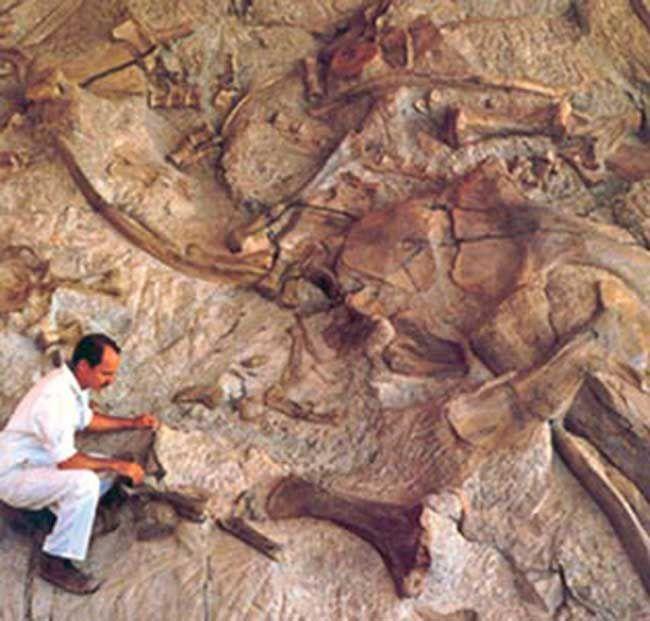 60 million year Dinosaur fossil found