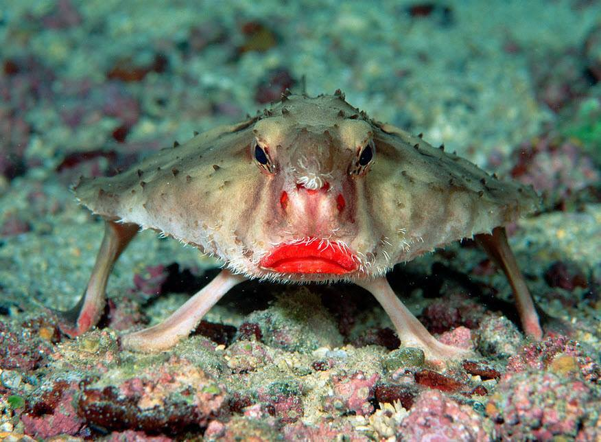 10 Most strange looking animals in the world