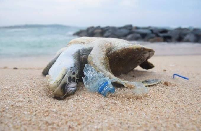 """""""It's just one straw, it's just one disposable cup, it's just one plastic bag"""" - 7.4 billion people. What are we doing??"""