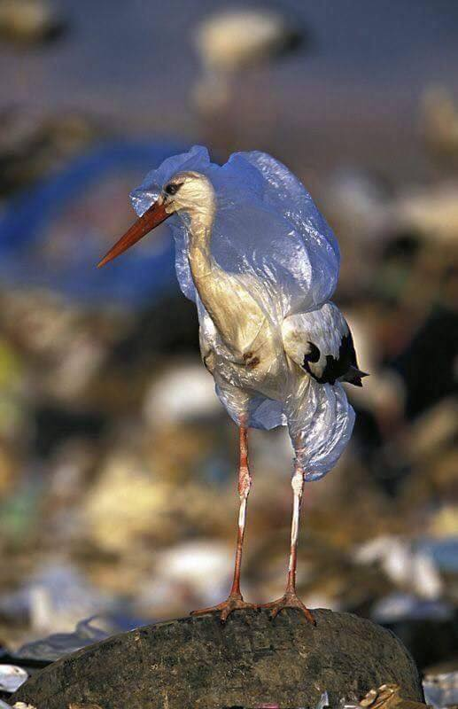 """It's just one straw, it's just one disposable cup, it's just one plastic bag"" - 7.4 billion people. What are we doing??"