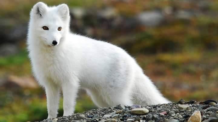 Rare White Animals (20 Pics)