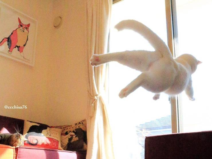 Perfectly Timed Photos - The Timing Was Perfect! (49 pics)